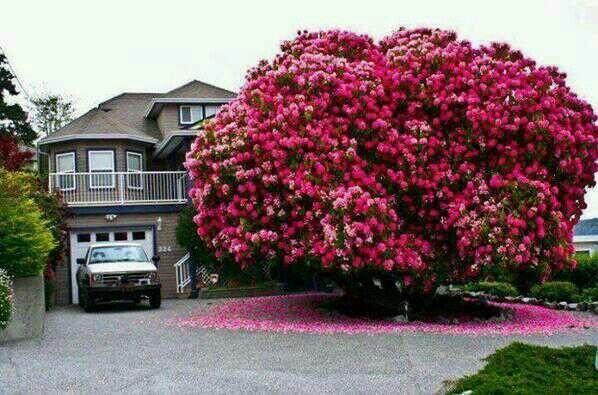 Nunca_es_demasiado_Rosa_The_Pink_Graff_025