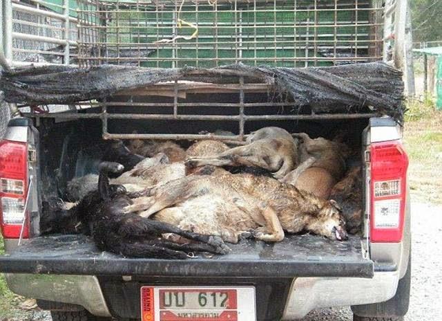 Dog Meat — Underground Thai business