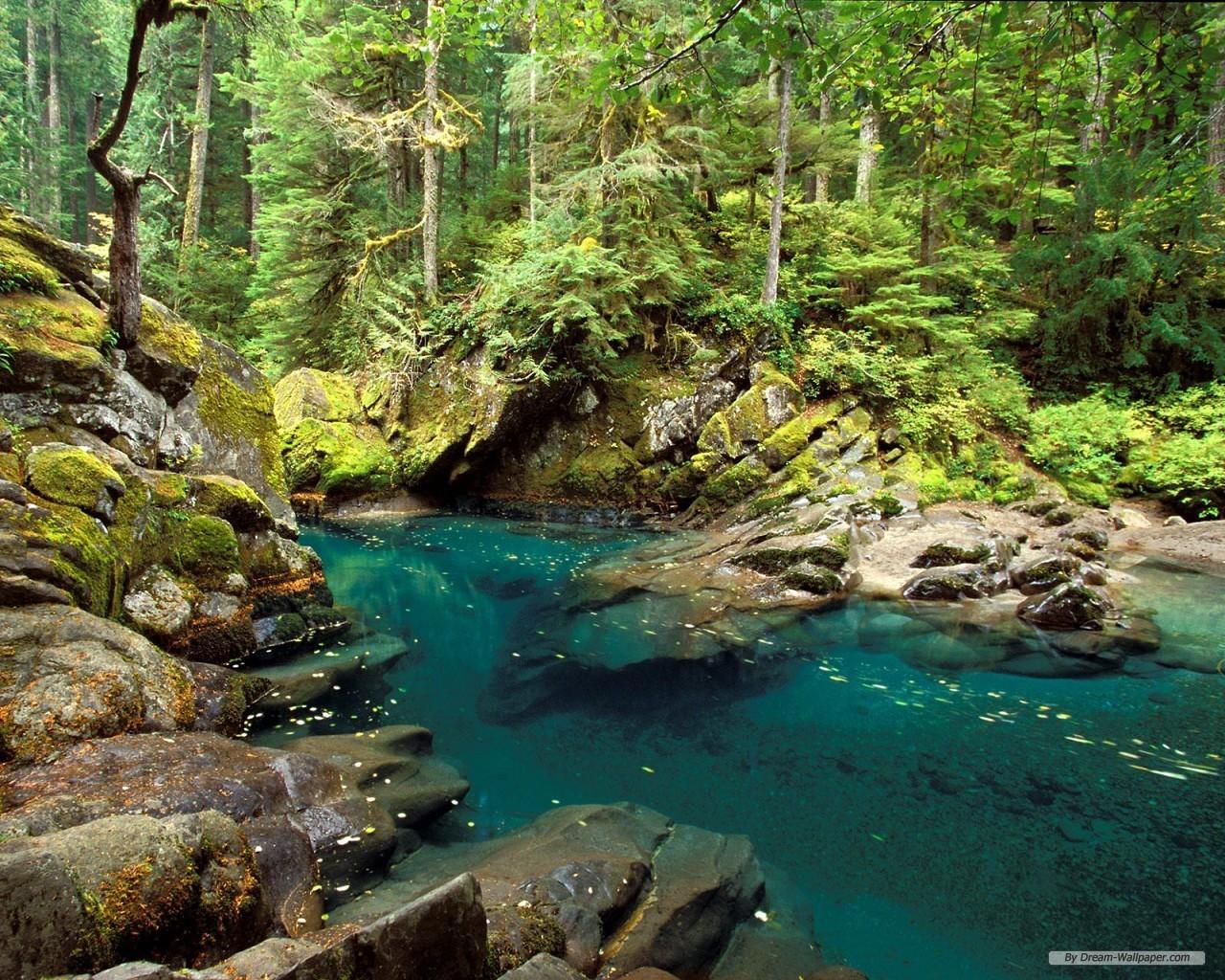 Orman manzara resimleri hd