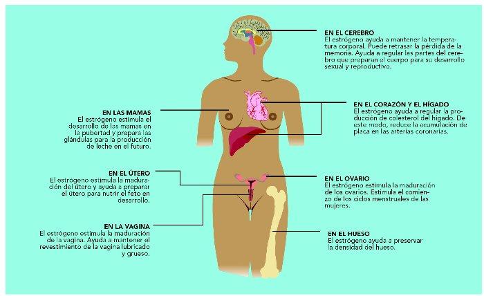 El ejercicio para el aumento del pecho de la mujer