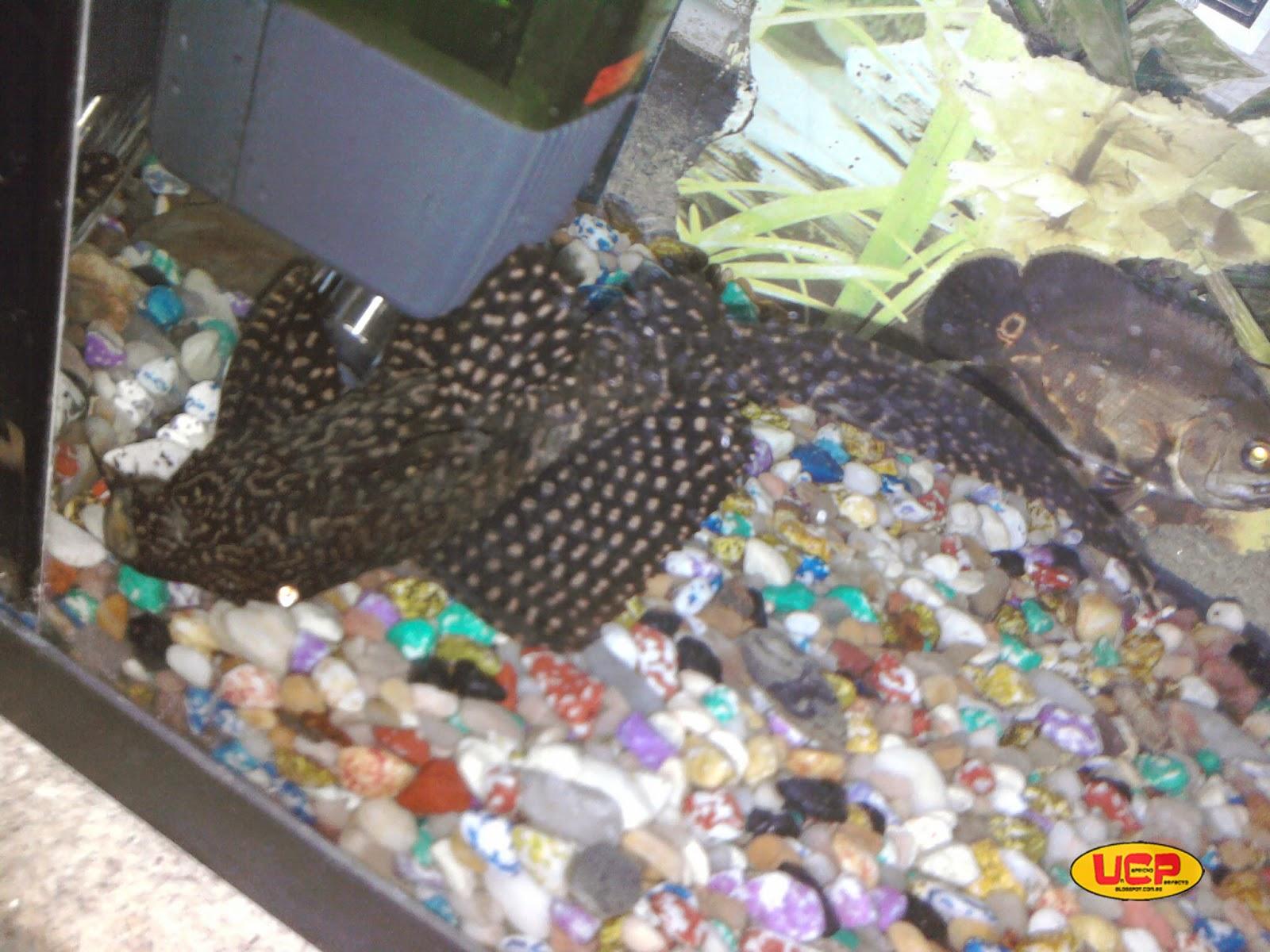 Tu blog de acuariofilia mala experiencia con un for Comida viva para peces