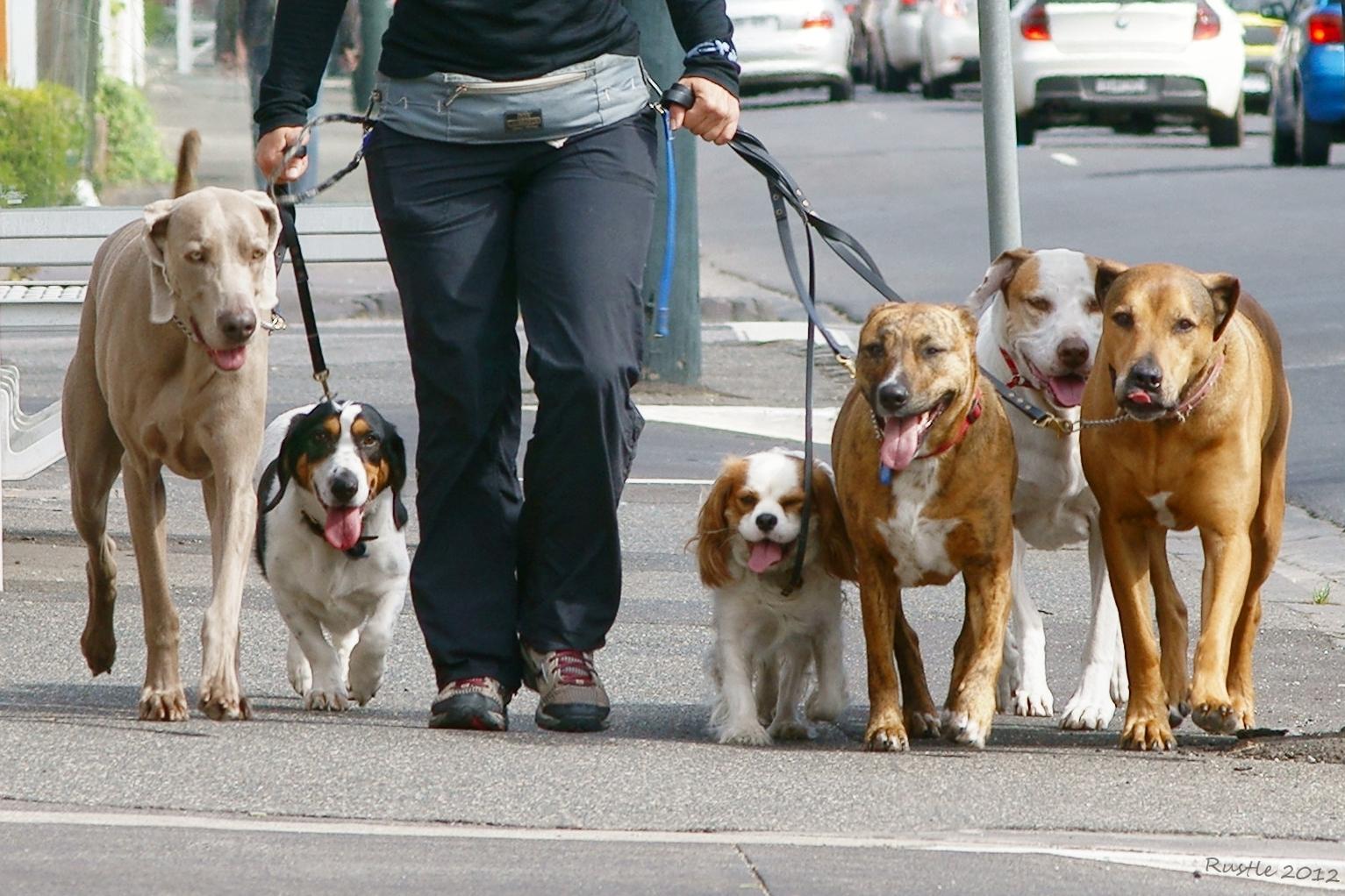 Dog Walking South Yarra
