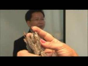 China Sifu memerlukan banyak teras gaharu gred A