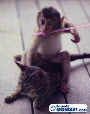 Monyet Dan Kucing