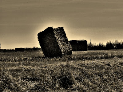 The lay of the hay