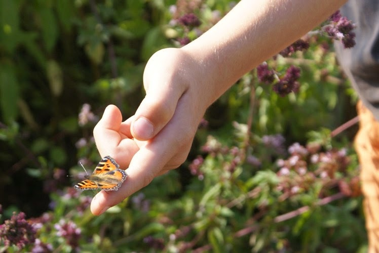 Butterfly Boy!
