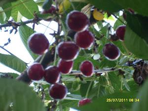 Kirsikkapuita 044-3380291 talonmiespalvelumme kautta