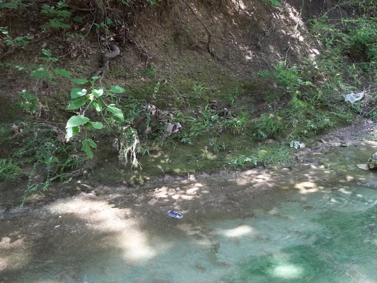 Bent Tree Bonsai Gathering Moss