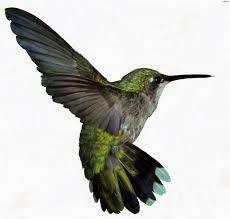 Apa Yang Dimaksud Algoritma Hummingbird Google