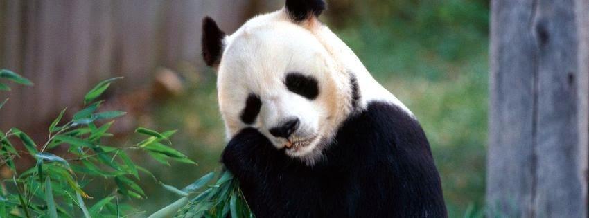 Couverture pour facebook panda