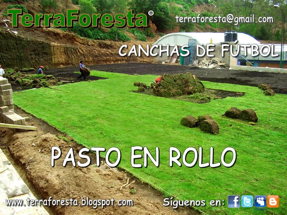 Pasto en rollo terraforesta pasto san agustin for Cesped en rollo