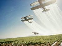 DDT, Pestisida Penyebab Alzheimer