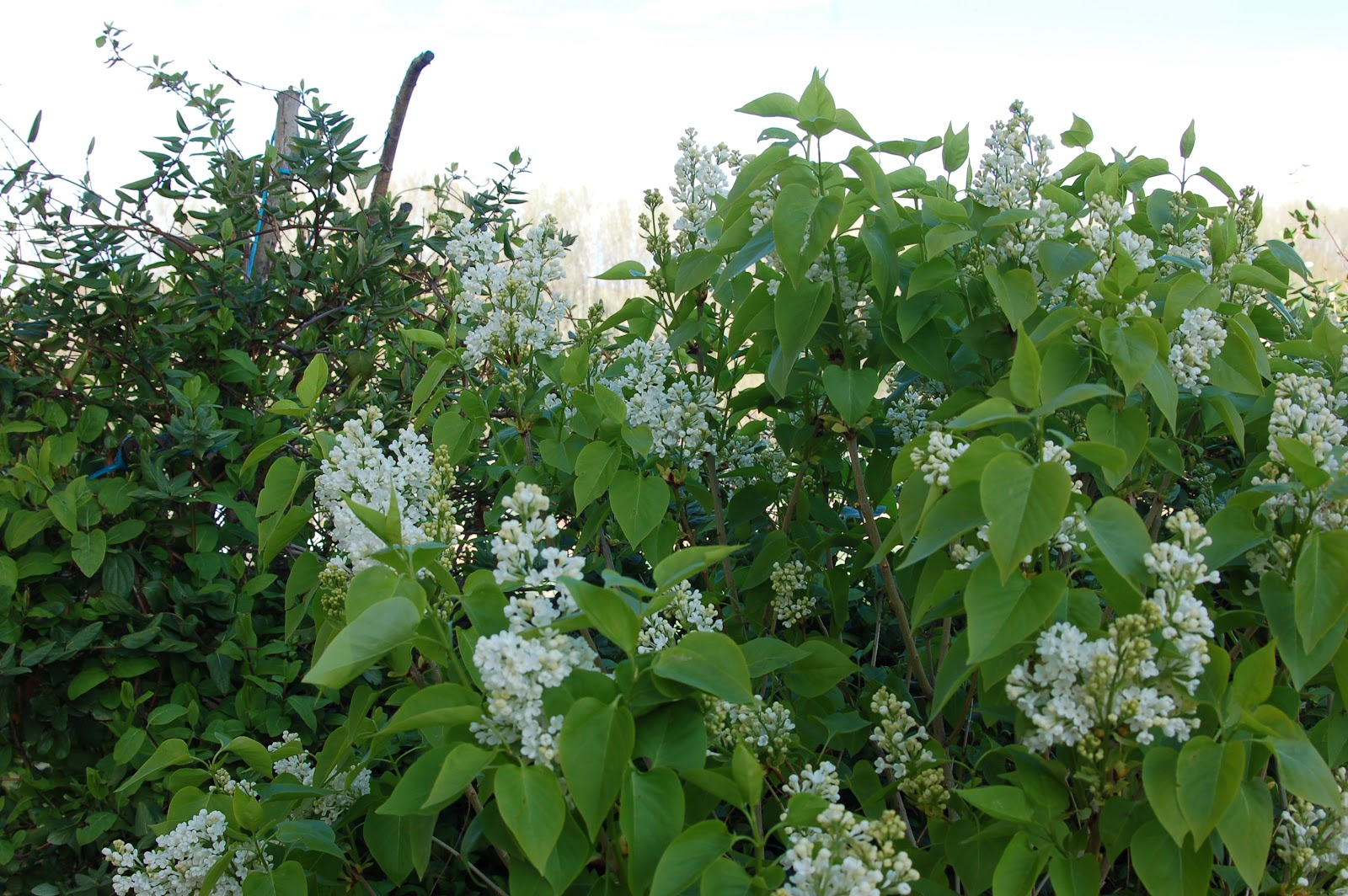 Un jardin para valentina lilo blanco for Jardin lilo