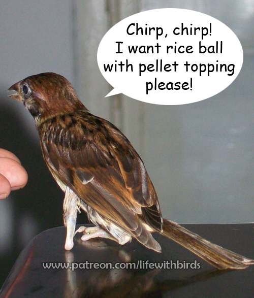 one foot handicapped tree sparrow pet