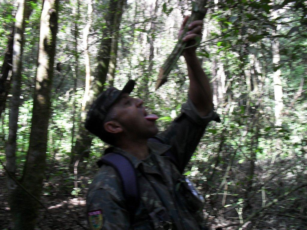 [Sobrevivência] Mega resumão Flona+14+maio+2011+037
