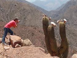 Flores de Cactus na Cuesta de Miranda