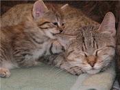 котята на продажу-kittens for sale!