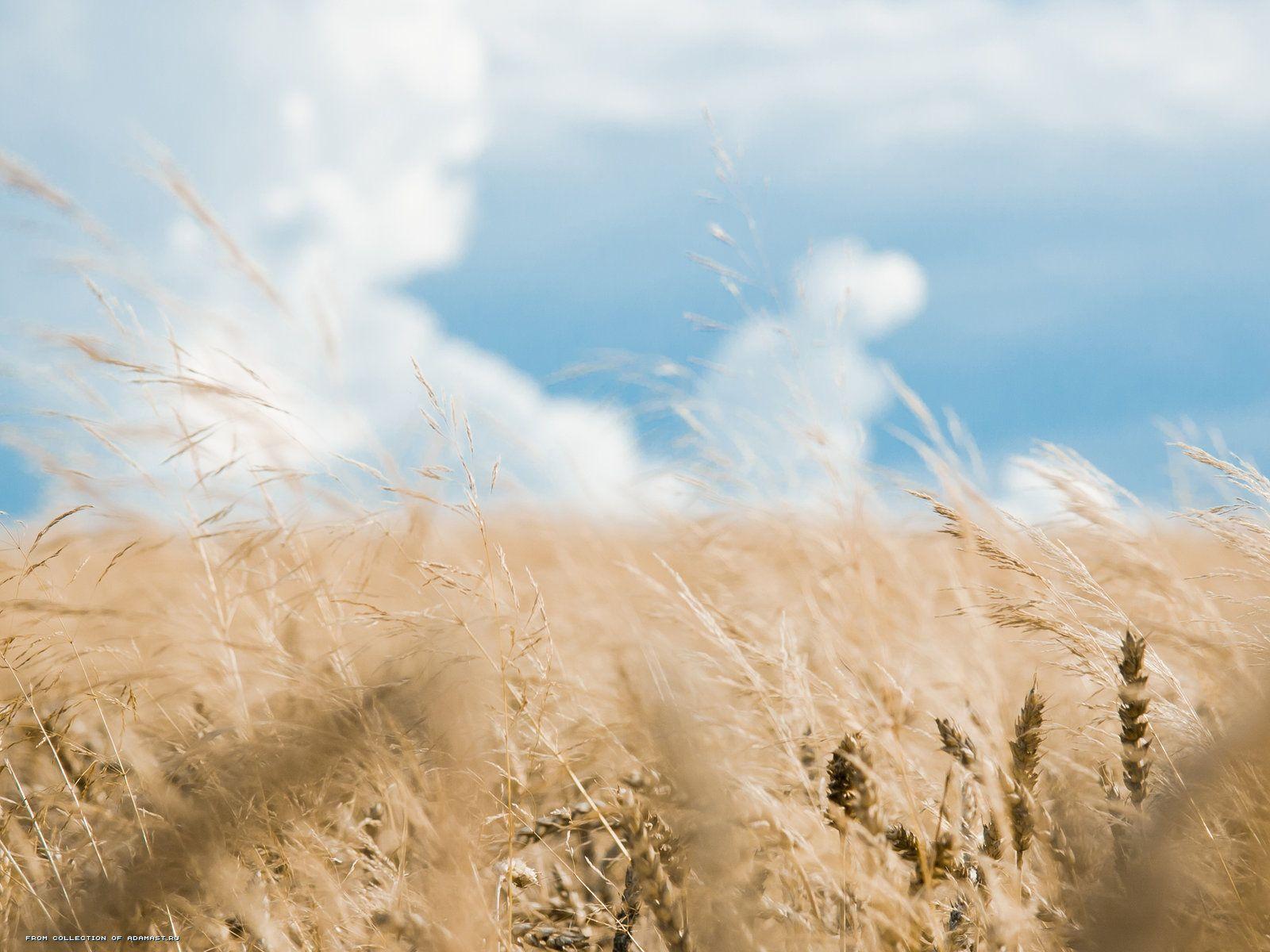 1600x1200, Nature, rye, field