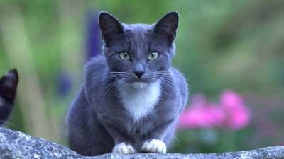 Astaga Kucing Setia Berjalan 3.218 KM Untuk Temui Majikan