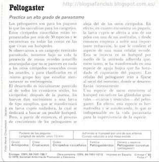 Blog Safari Club, características del Peltogaster