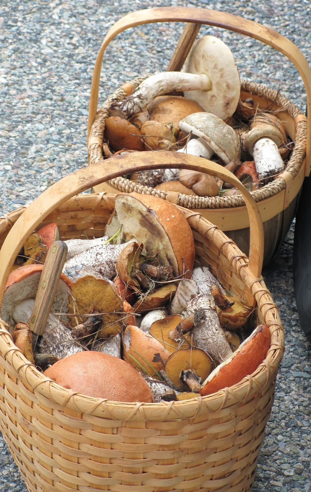 Find Wild Mushrooms in the Province Lands