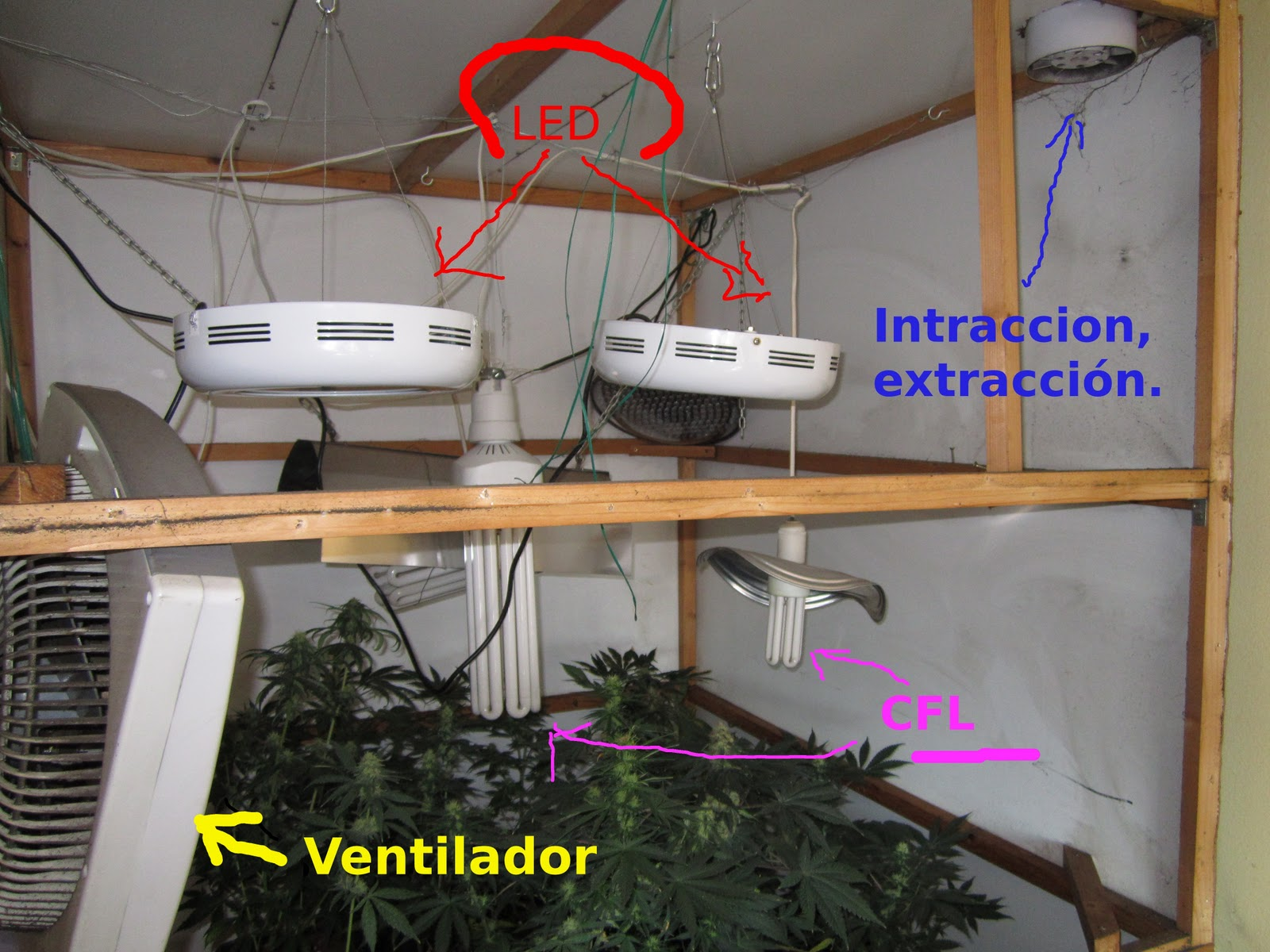 Pacha mama cultivo en interior for Cultivo en interior