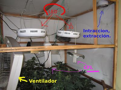 Pacha mama cultivo en interior for Leds para cultivo interior