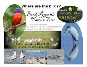 Birding Tours on Jekyll Island