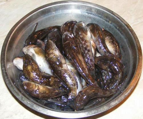 peste, pesti, guvide, guvizi, pesti de marea neagra, peste din marea neagra, peste cu carnea alba, retete de peste, preparate din peste, peste dulce, pesti dulci, pesti gustosi, peste gustos, peste bun, hanusi,