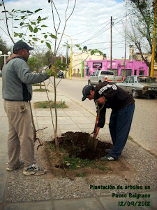 Reforestación en Paseo Belgrano