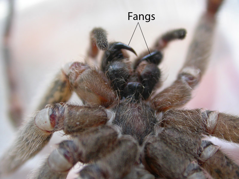 Squirrel\'s View: Spider Anatomy