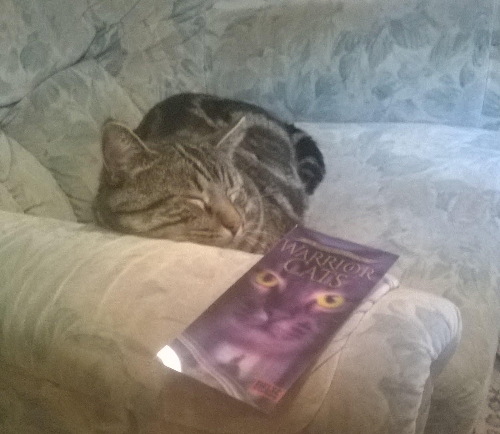 Mein Kater will auch WaCa lesen