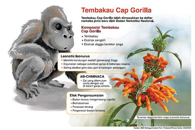 Hasil gambar untuk Tembakau gorila