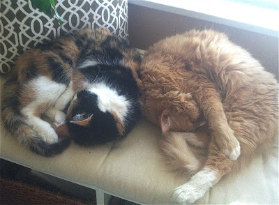 Daisy the Calico cat and Bailey the orange tabby
