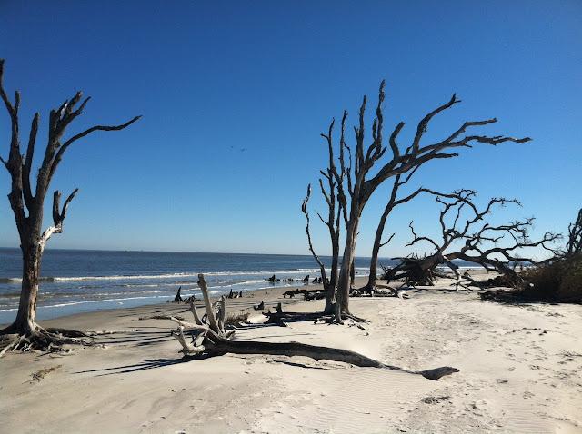 Driftwood Beach Jekyll Island
