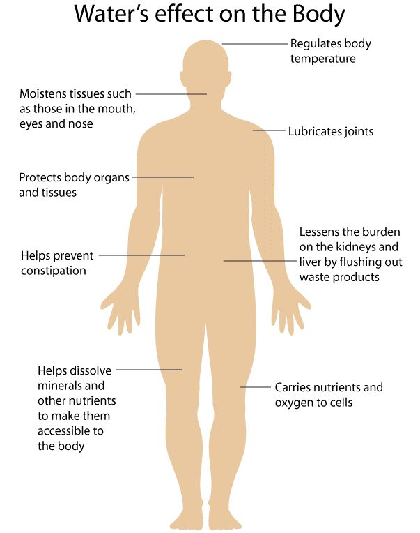How Many Bones Are In The Human Body Wikipedia Human Body Diagram