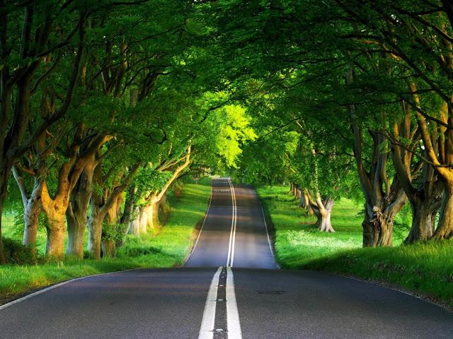 Wallpaper: Green Road