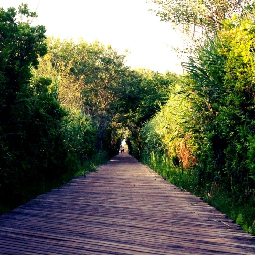 Wooden boardwalks Fire Island