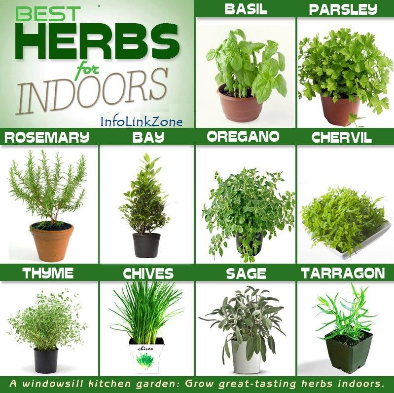Mosquito repellent plants - Indoor water plants list ...