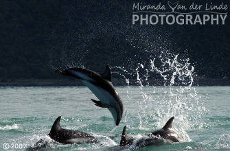 Dolphins gallery