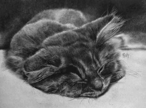 19-Hyper-realistic-Cats-Pencil-Drawings-Hong-Kong-Artist-Paul-Lung-aka-paullung-www-designstack-co
