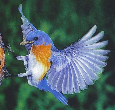 Download Birds wallpaper