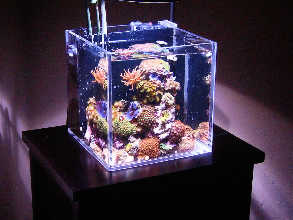 Fish aquarium price india - Aquarium Fish Tank Price In Bangalore Types Of Aquarium