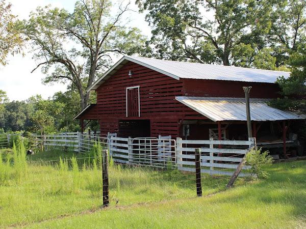 The Farm {Summer 2015}