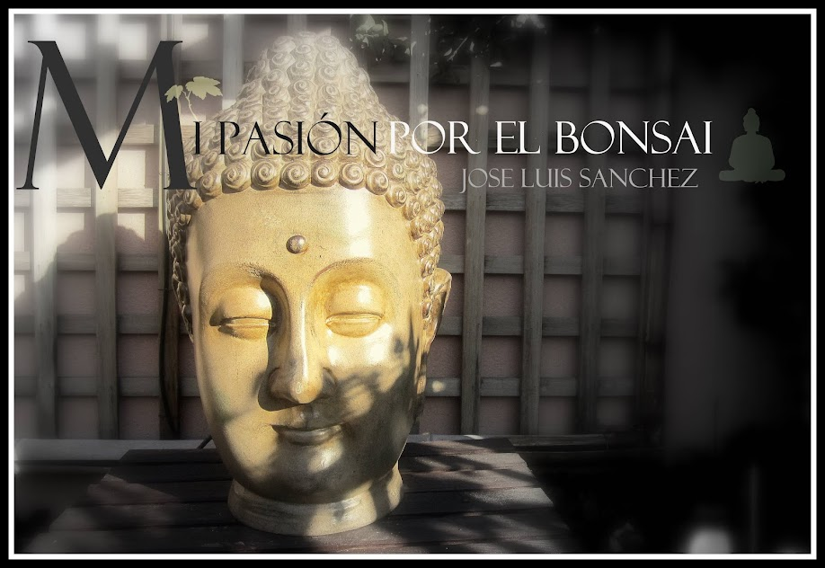 Mi pasion por el bonsai