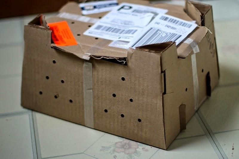 mail order peeps!