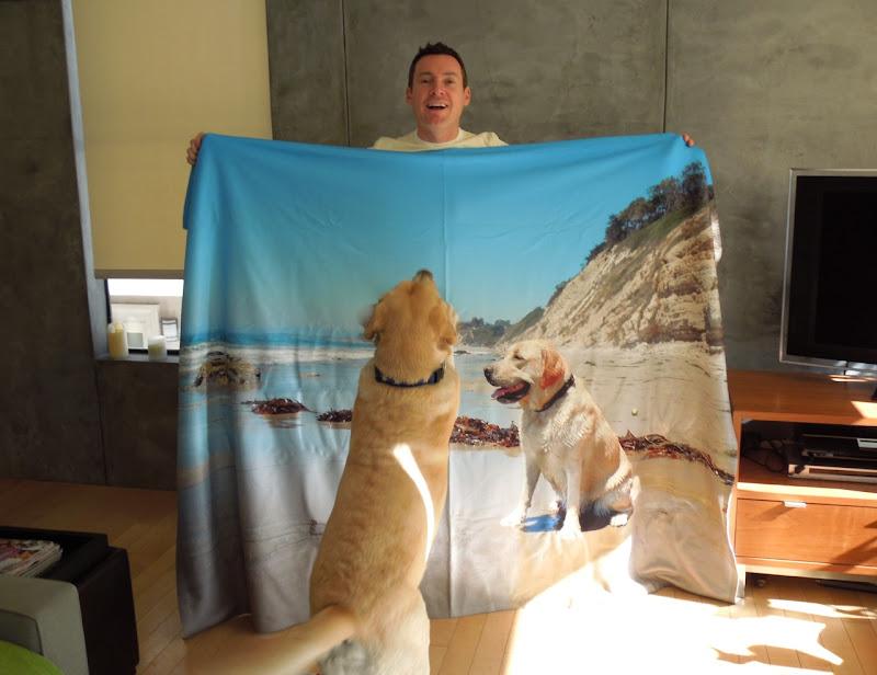 Labrador Cooper blanket