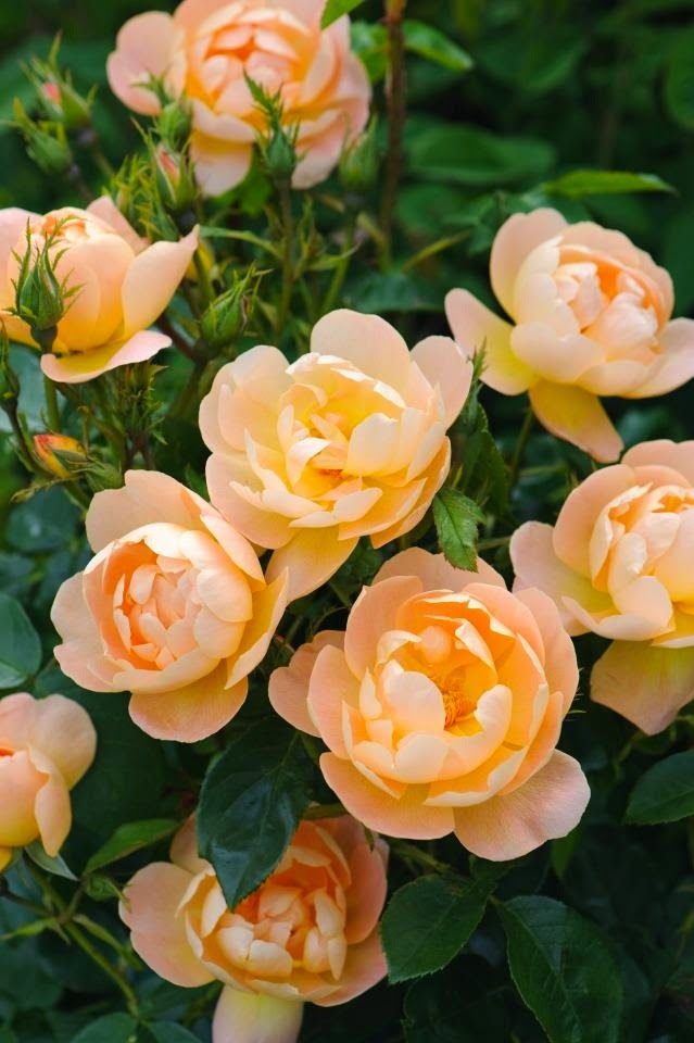 Top 5 most beautiful flowers in the world dreamy nature top 5 most beautiful flowers in the world mightylinksfo