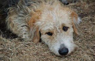 Собака лежащая на земле