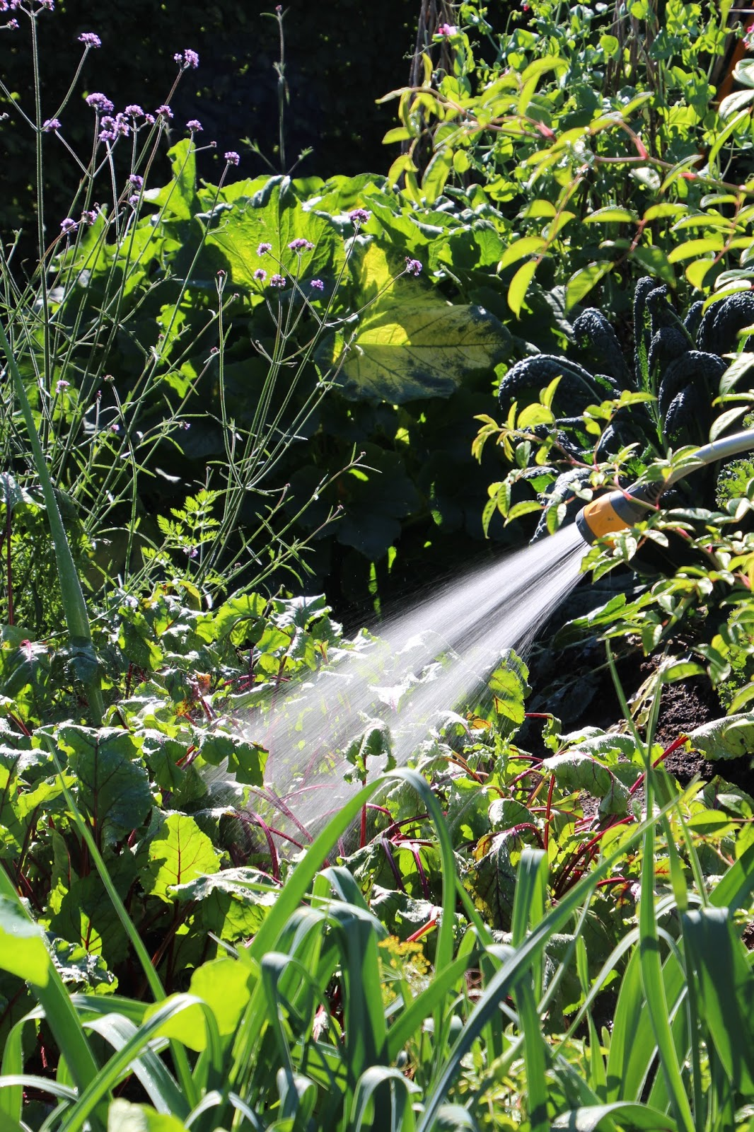trädgårdsblogg köksträdgård
